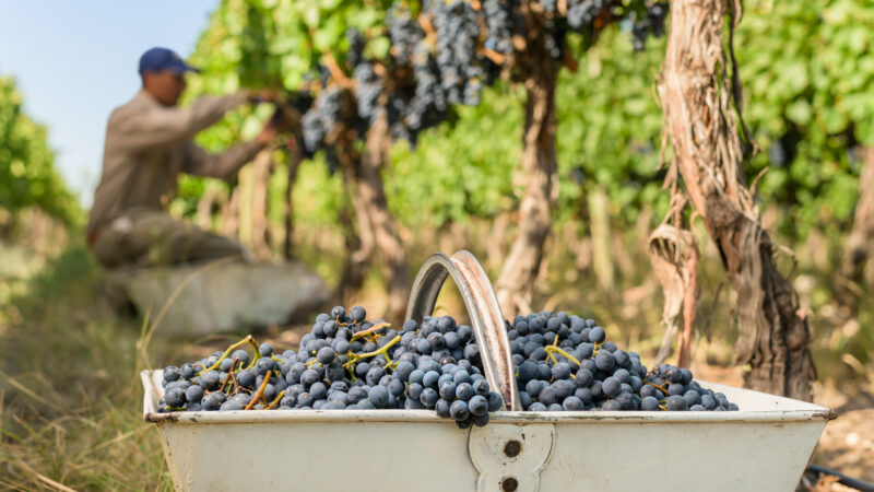 Espumantes a base de Pinot Noir y Malbec: el estilo argentino que eligen cada vez más los consumidores