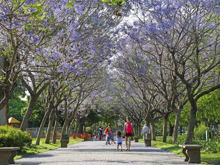 La Ciudad de Buenos Aires obtuvo un reconocimiento internacional por la gestión de su arbolado
