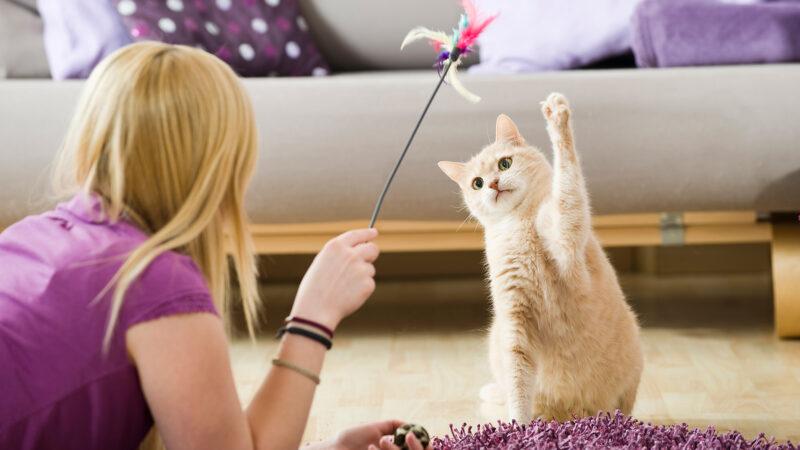 """Tips para el cuidado de los gatos cuando se recupere la """"normalidad"""""""