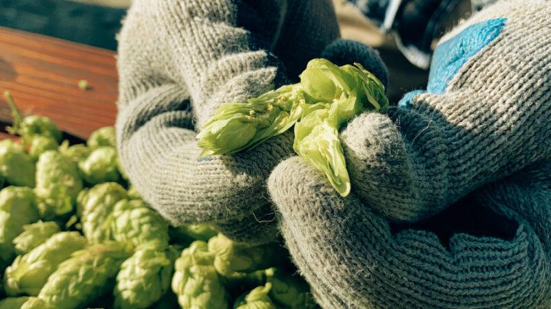 Fresh Hop: La nueva cerveza experimental de Kunstmann